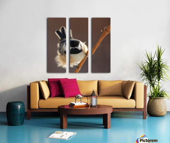 Black capped Chickadee Split Canvas print