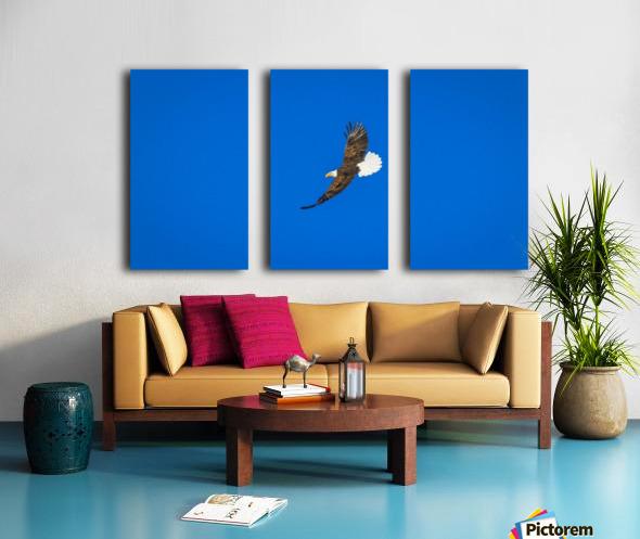 Soaring Bald Eagle Split Canvas print