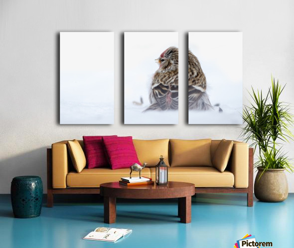 Common Redpoll Split Canvas print