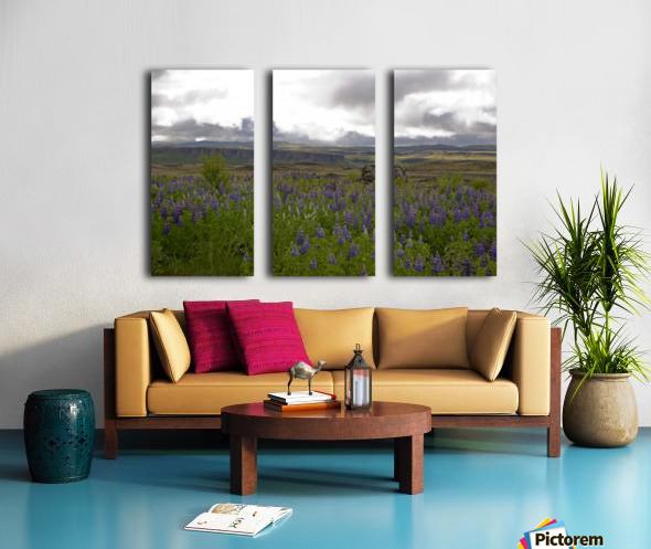 Iceland in Bloom Split Canvas print
