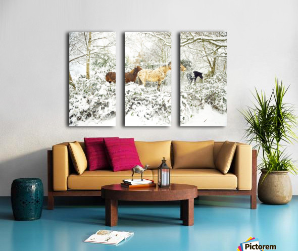 SNOWY APPALOOSA Split Canvas print