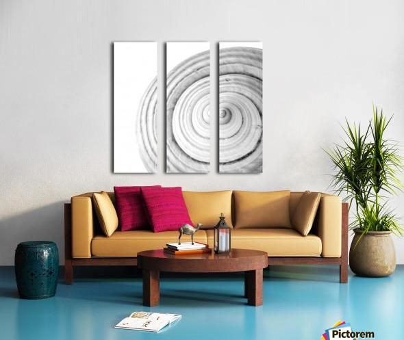 Conch 1 Split Canvas print