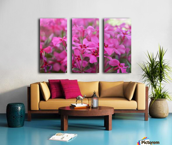 Pink Flowers Photograph Split Canvas print