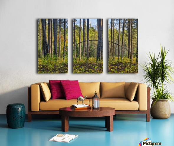 Stand of Trees Split Canvas print