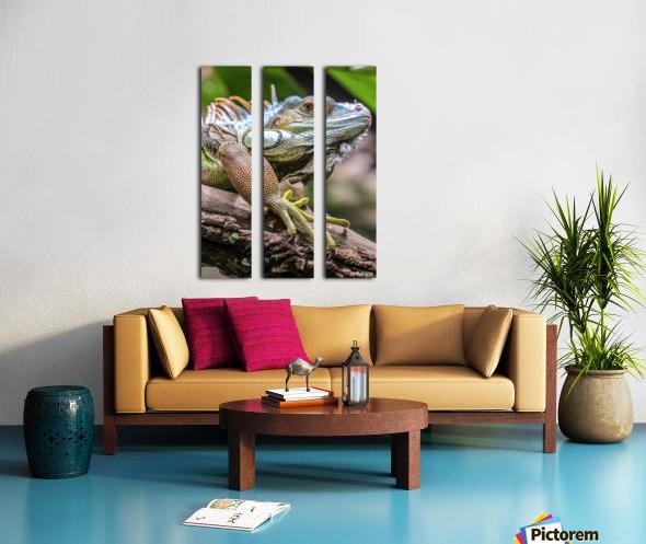 The Raptor Split Canvas print