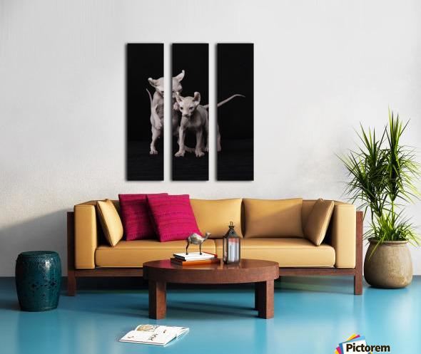 Elf Sphinx kittens Split Canvas print