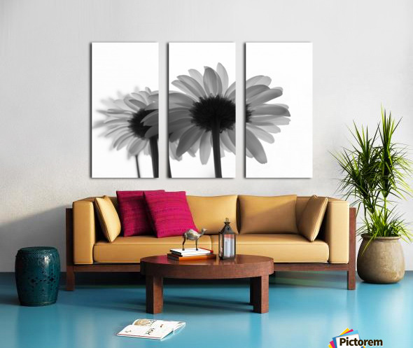 Daisies Rowing To The Left BW Split Canvas print