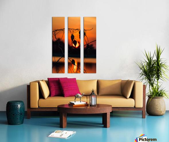 Vine Milkweed at Sunset Split Canvas print