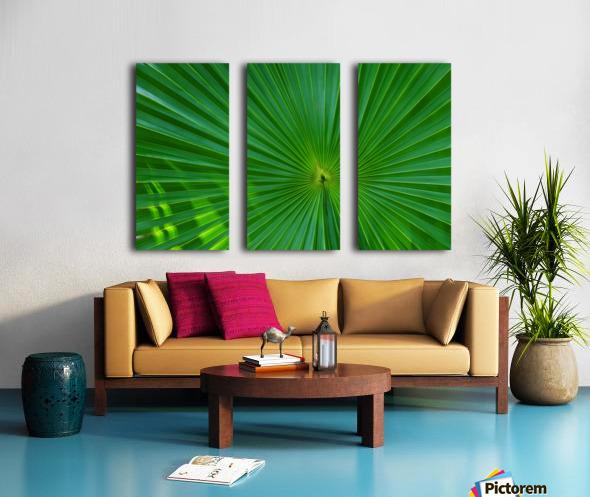 Palm tree detail Split Canvas print