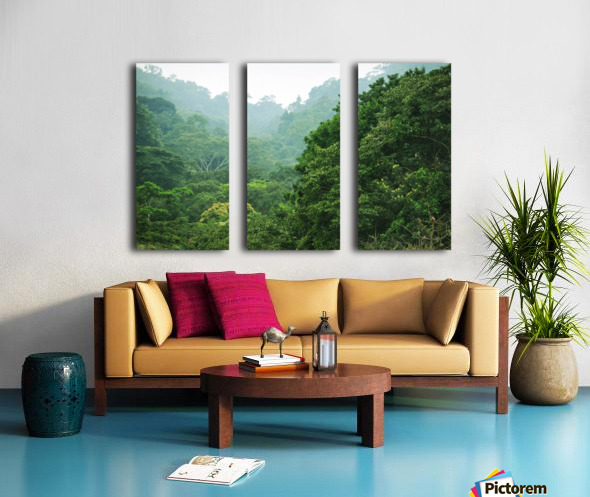 Rainforest Canopy Split Canvas print