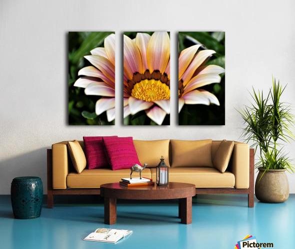 Gazania Flower Photograph in Orange and Pink Split Canvas print