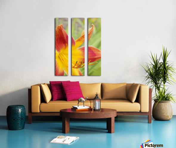 Peach Lilly Split Canvas print