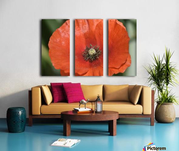 Red Poppy Split Canvas print