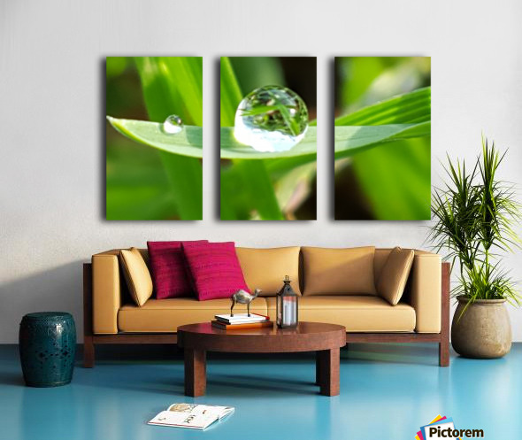 Dew Drops Split Canvas print