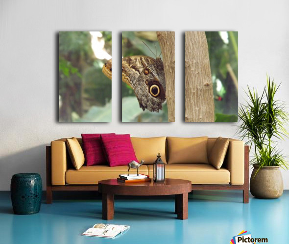 Giant Owl Butterfly on Tree Split Canvas print