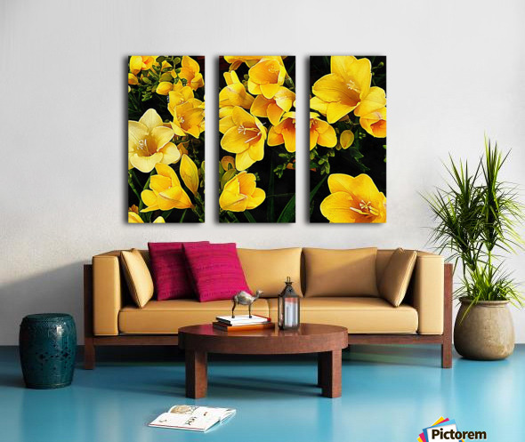 Yellow Freesias Split Canvas print
