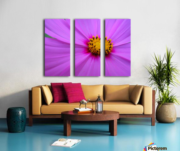 Purple Cosmo Split Canvas print