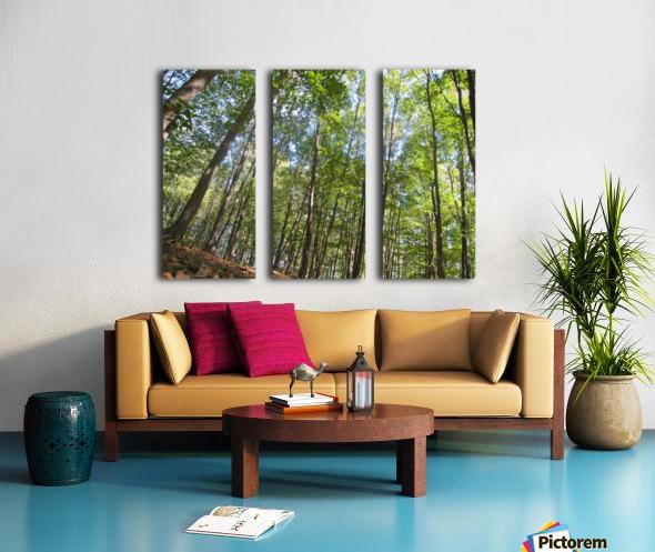 Landscape (249) Split Canvas print