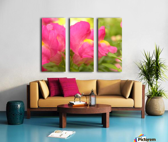 Pink Snapdragons Photograph Split Canvas print