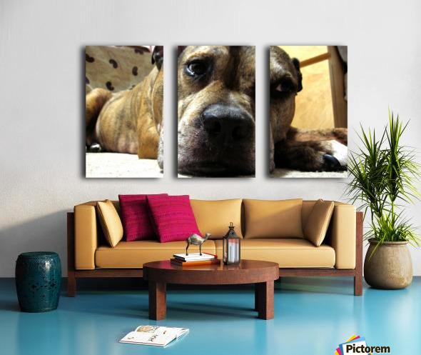 dog Split Canvas print
