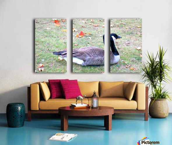 duck (3) Split Canvas print