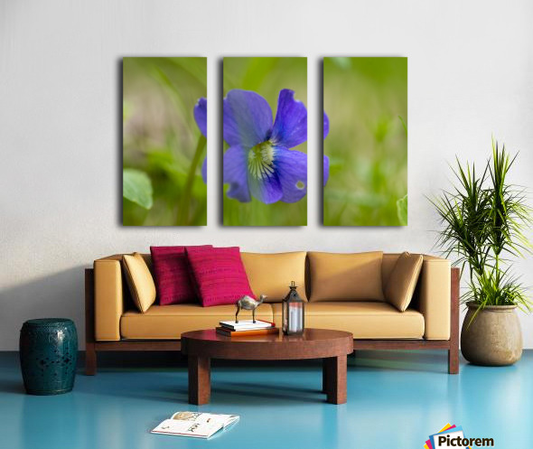 Wild Violet Split Canvas print