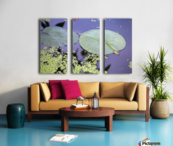 Lily Pads and Duckweed Dow Gardens 2018 Split Canvas print
