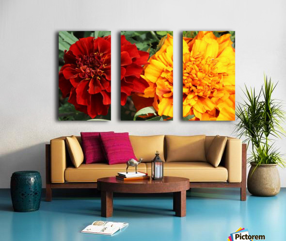 Red and Yellow Marigolds 062718 Split Canvas print