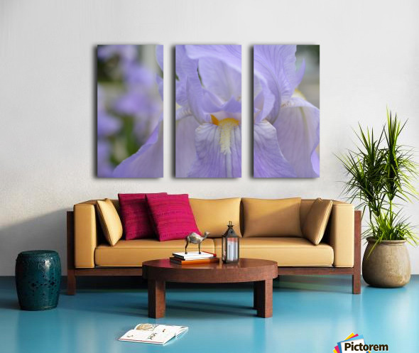 Pale Blue Iris Photograph Split Canvas print