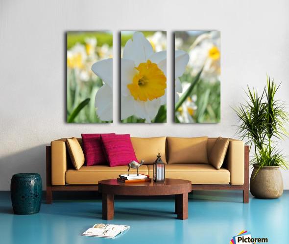 White Daffodil Photograph Split Canvas print