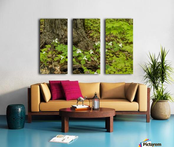 Trillium Woods 10 Split Canvas print