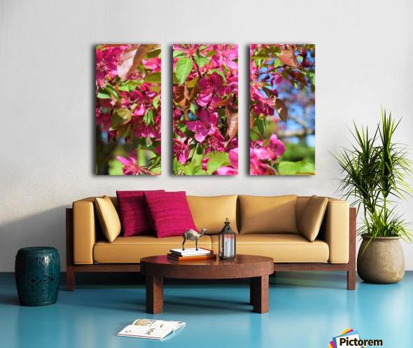 Ticonderoga Crab Apple Flowers in May Split Canvas print