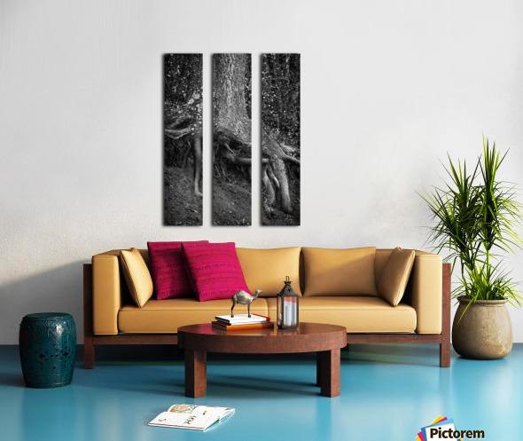 Roots... Split Canvas print