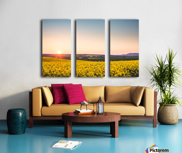 Beautiful sunset over the yellow rapeseed field. Split Canvas print