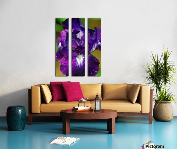 Purple With White Splash Iris Split Canvas print
