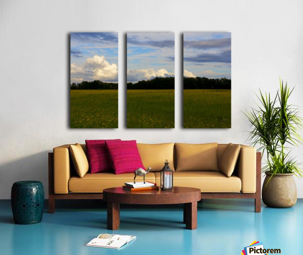 Champ ensoleillé- Sunny field Split Canvas print