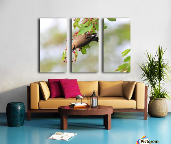 Which One Do You Think I Should Choose Split Canvas print