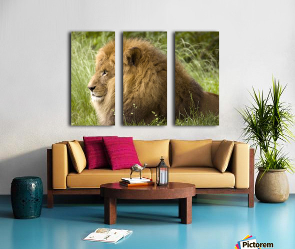 King of the Beasts Split Canvas print