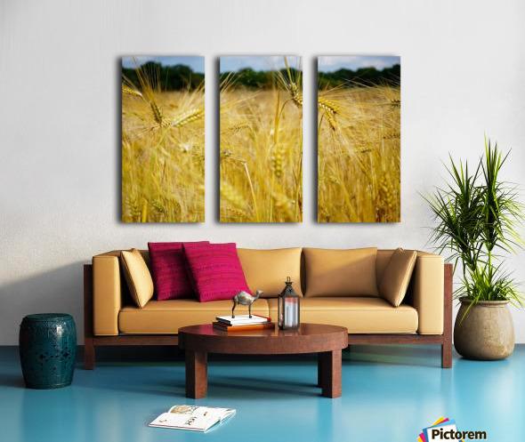 Corn Cob Landscape 06 Split Canvas print