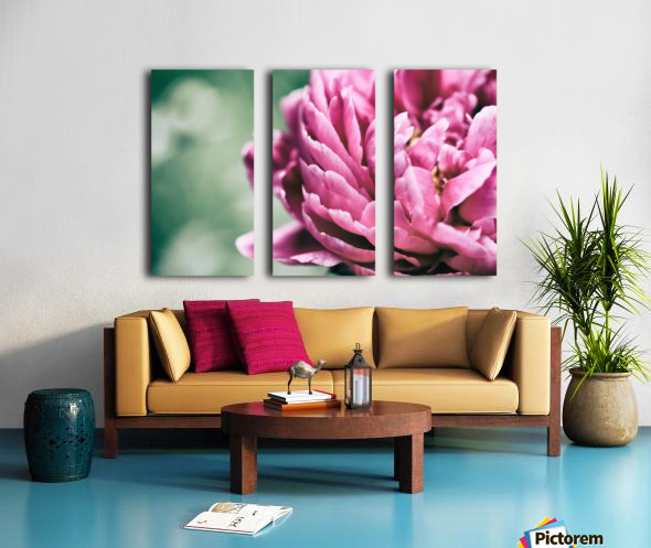 Hot Pink Peony Split Canvas print