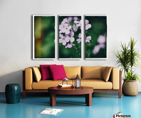 Phlox in Bloom Split Canvas print