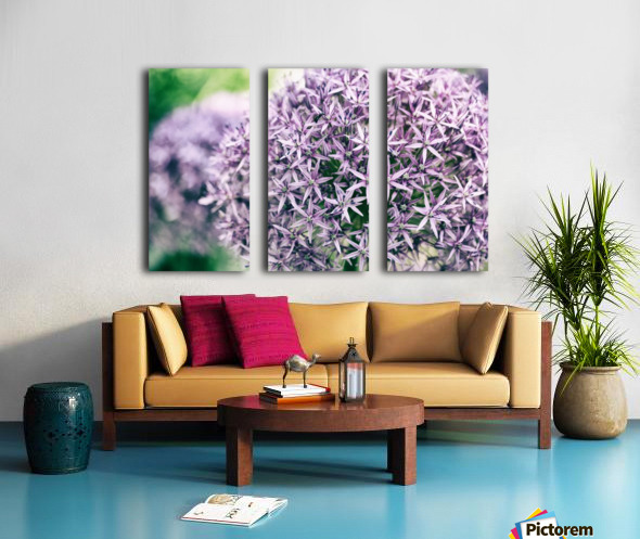 Allium in Bloom Split Canvas print