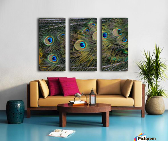 peacock tail feathers close up Split Canvas print