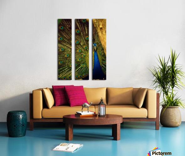 blue and green peafowl Split Canvas print