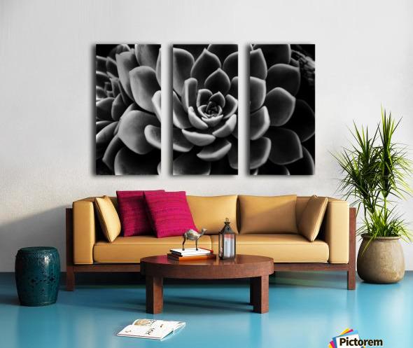 Succulent Split Canvas print