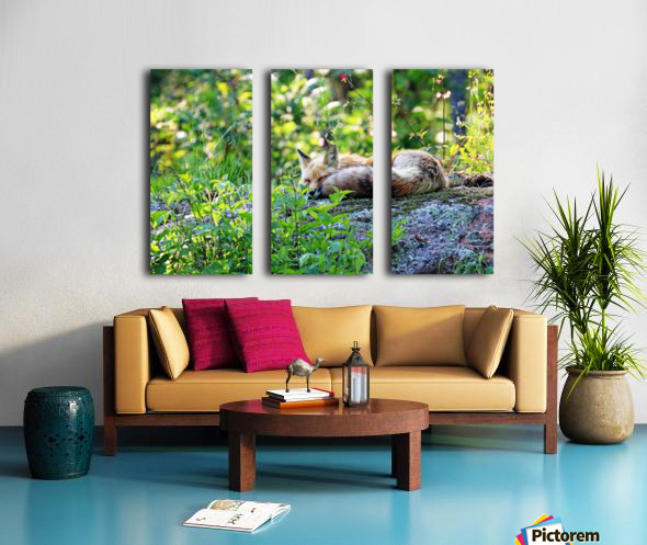 Nap Time For Red Fox I Split Canvas print