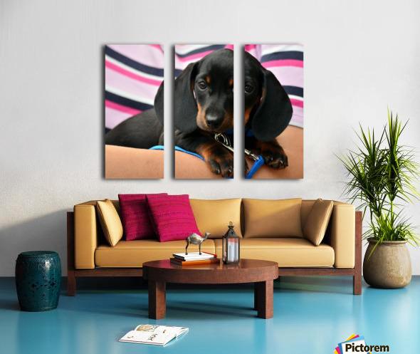 dachshund puppy young animal Split Canvas print