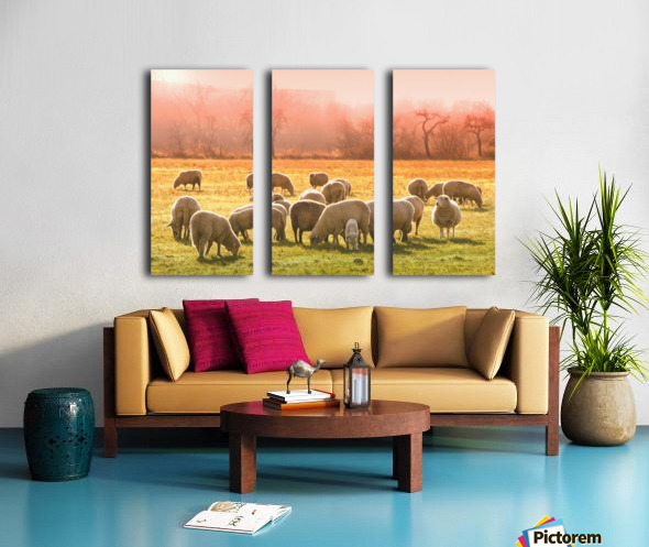 animal sheep flock of sheep meadow Split Canvas print