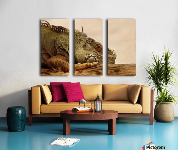 animal reptile lizard iguana Split Canvas print
