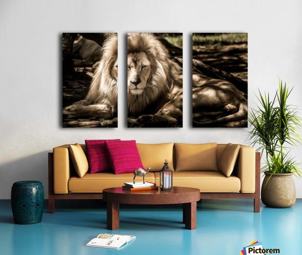 mammal lion animal portrait Split Canvas print